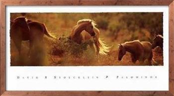 Palominos by David Stoecklein
