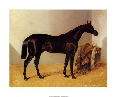 Charles XII Horse Painting by J. Herring